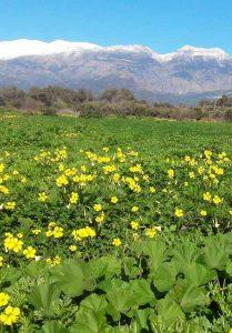 Wintertime South Crete