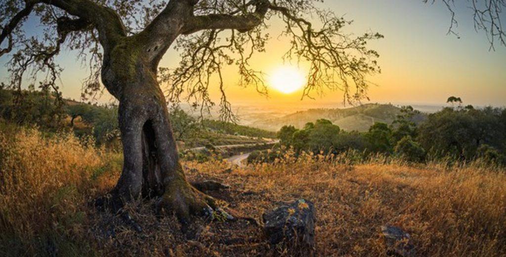olive South Crete