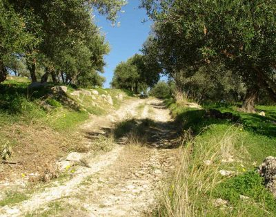 olivegrove-south-crete