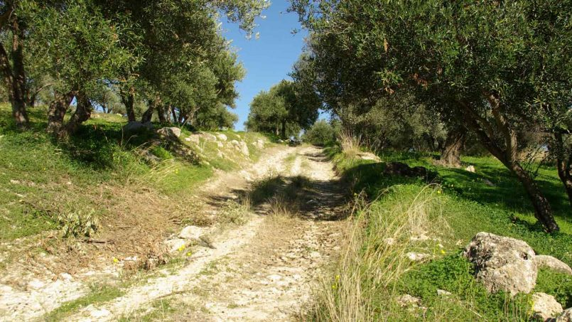 olivegrove-south-crete