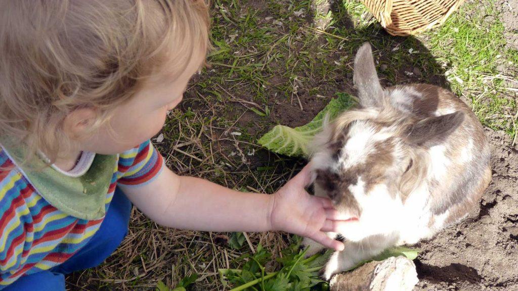 Pet the rabbits, Zeus Dione, Lagolio