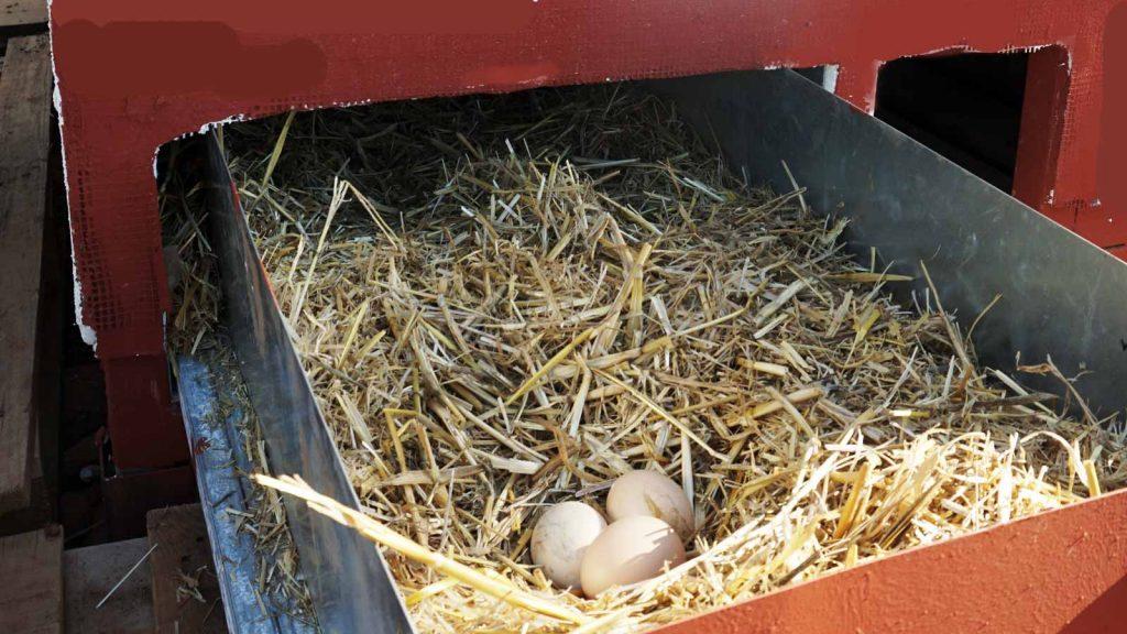 Fresh Eggs, Bio, Zeus Dione, lagolio