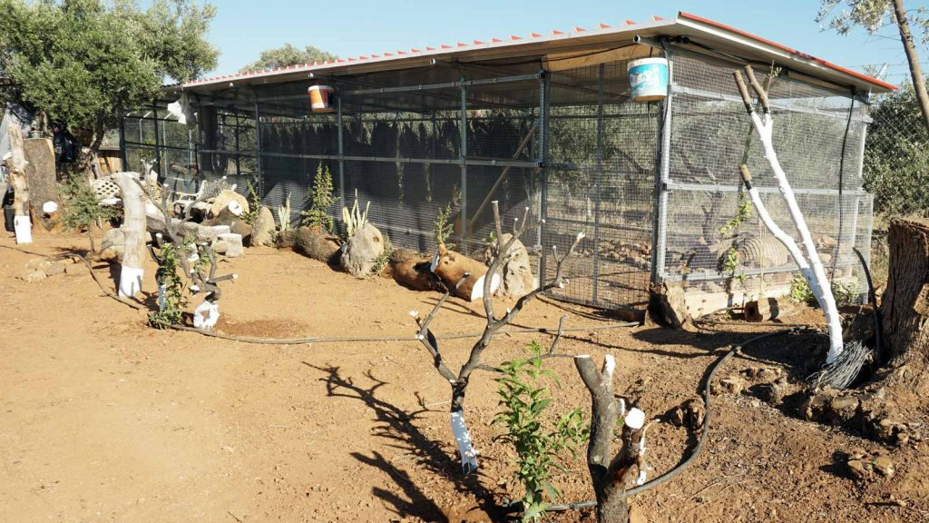 Animal farm, Zeus Dione, Lagolio