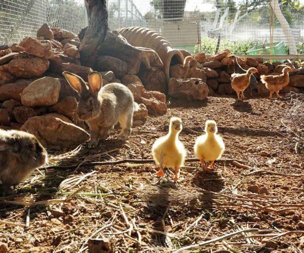 animalfarm zeusdione, lagolio
